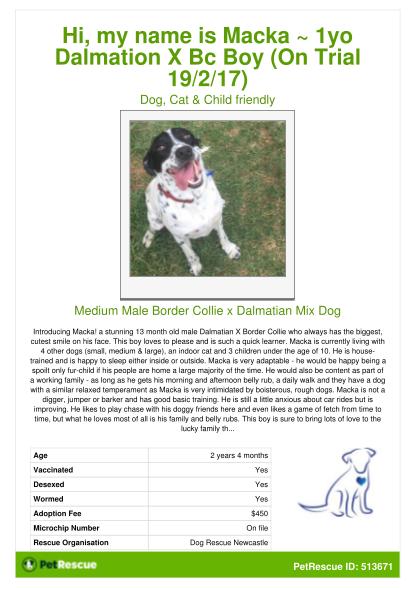 102098214-adoption_posterpdf-adoption-poster-macka1yo-dalmation-x-bc-boy-on-trial-19217